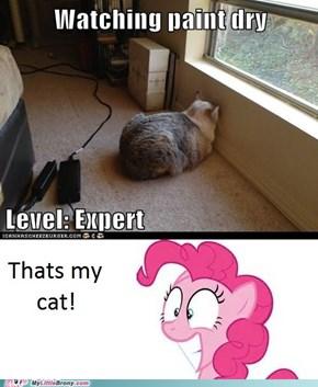 That's my cat!