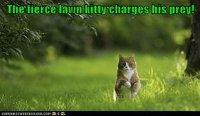 Fierce Lawn Kitty