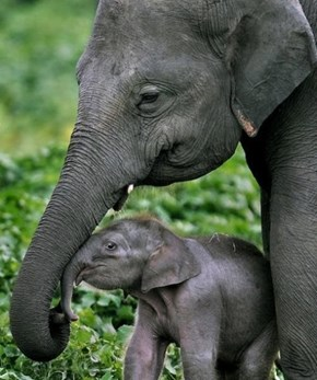 A Baby Elephant and His Mom