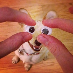 How You Like Them Googly Eyes?