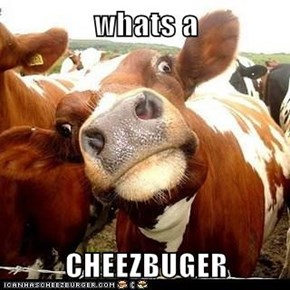 whats a  CHEEZBUGER