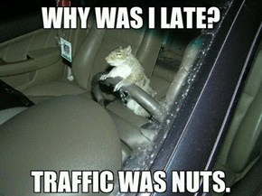 A Bunch of Squirrely Drivers Out There