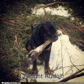 I caught rudolf