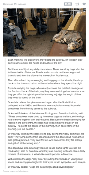 Stray Dogs in Russia
