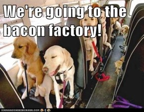 We're going to the bacon factory!
