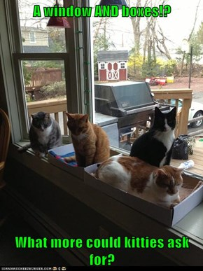 A window AND boxes!?  What more could kitties ask for?