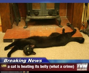 Breaking News - a cat is heating its belly (what a crime)