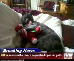 Breaking News - urso vermelho raro, e sequestrado por um gato.