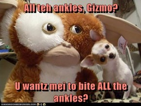 All teh ankles, Gizmo?  U wantz mei to bite ALL the ankles?