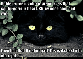 Golden-green, golden-green eyes that captures your heart. Shiny nose cool and wet  Love to u that'll neber part. Dis is da best u'll eber get.