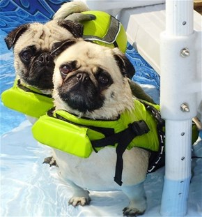 We're Ready to Learn the Doggy Paddle
