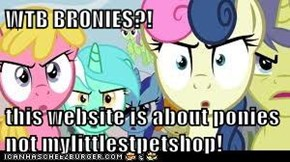 WTB BRONIES?!  this website is about ponies not mylittlestpetshop!