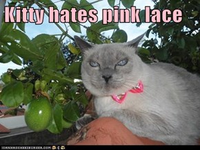 Kitty hates pink lace
