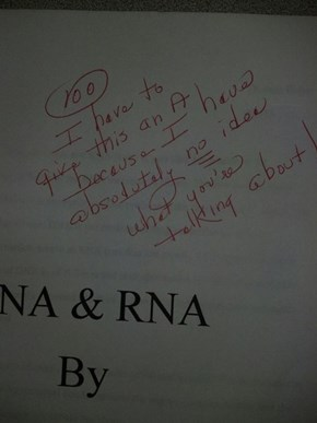 Now This Is How You Ace a Paper!