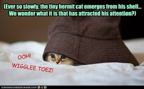 (Ever so slowly, the tiny hermit cat emerges from his shell...   We wonder what it is that has attracted his attention?)