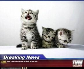 Breaking News - gato canta com um trio de gato, so que nao