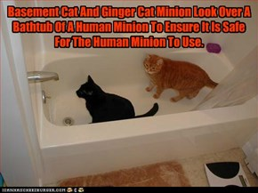 Basement Cat And Ginger Cat Minion Look Over A Bathtub Of A Human Minion To Ensure It Is Safe For The Human Minion To Use.
