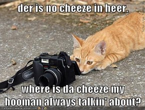 der is no cheeze in heer.  where is da cheeze my hooman always talkin' about?