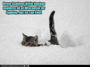 Brave Asplorer Kittie