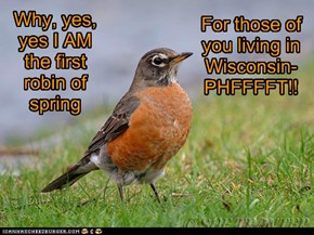 Why, yes, yes I AM the first robin of spring