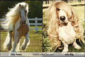 This horse Totally Looks Like this dog