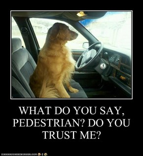 WHAT DO YOU SAY, PEDESTRIAN? DO YOU TRUST ME?