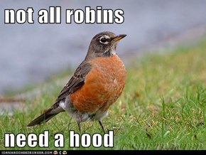 not all robins  need a hood
