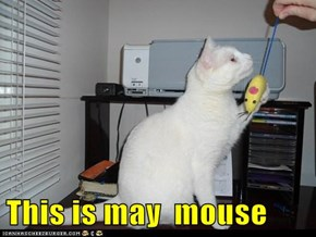 This is may  mouse