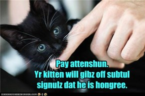Pay Attenshun