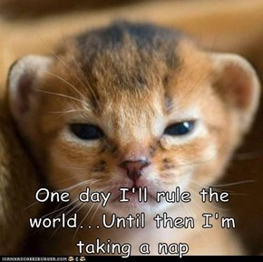 One day I'll rule the world...Until then I'm taking a nap