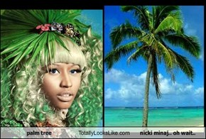 palm tree Totally Looks Like nicki minaj.. oh wait..