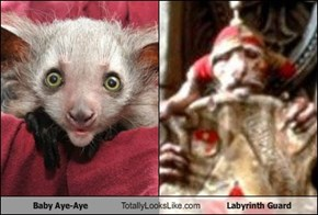 Baby Aye-Aye Totally Looks Like Labyrinth Guard