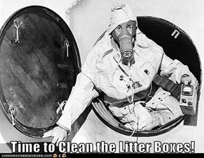 Time to Clean the Litter Boxes!