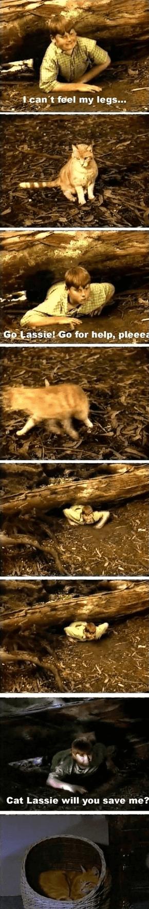 Cat Lassie