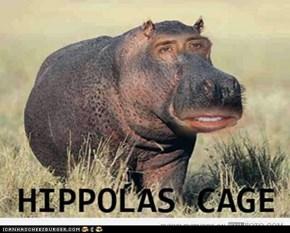 Hippolas Cage