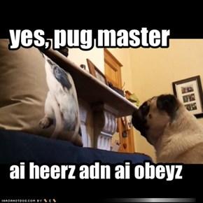 yes, pug master