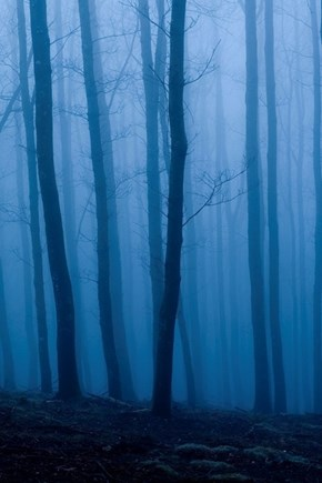 Deep in a Blue Forest