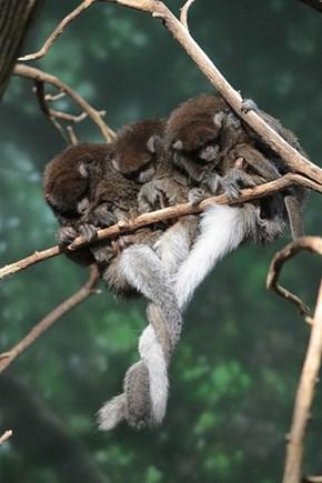Tail hug
