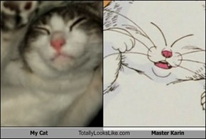 My Cat Totally Looks Like Master Karin