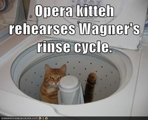 Opera kitteh rehearses Wagner's rinse cycle.