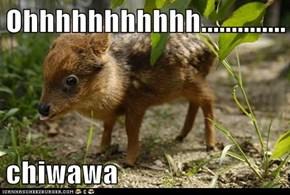 Ohhhhhhhhhhh..............  chiwawa
