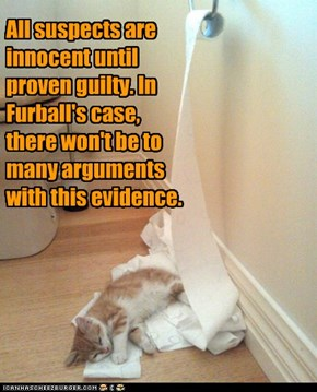 All suspects are innocent until proven guilty. In Furball's case, there won't be to many arguments with this evidence.