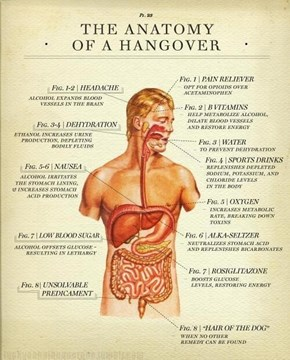 The Science of the Hangover