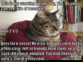 This is my starving poster boy, Tae. As you can see, life of rescued,  Now 2 1/2 Bery fat n sassy! He n six siblings were lucky n this case, left at friends feed store, in a sack. All where adopted. Tae had 2hernia surg's, worth every cent.