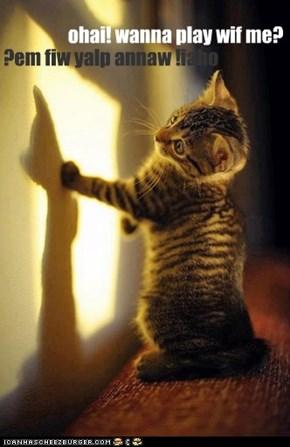 ohai! wanna play wif me?