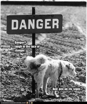 Danger? Pfffttttt,   I  laugh in the face of danger.