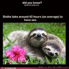 The Benefits of Being a Sloth