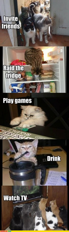 What your cats do when you're gone