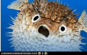 oh noes! I just realised im a blowfish!