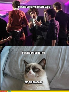 HARRY MEET GRUMPY CAT IN PERSON